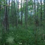 Moorwälder