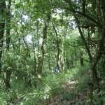 Euro-Sibirische Eichen-Steppenwälder