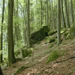 Buchenwälder, Buchenmischwälder