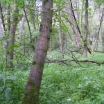 Au-, Moor-, Schlucht- und Hangmischwälder